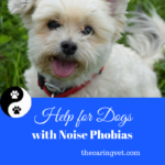 Help For Dogs With Noise Phobias