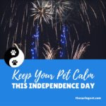 Keep Your Pet Calm This Independence Day