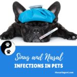 Sinus and Nasal Infections in Pets