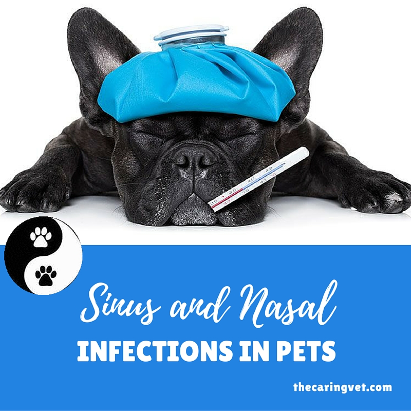 sinus infections in your pet