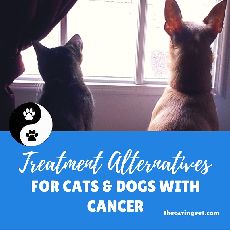 treatment alternatives for pets with cancer