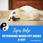 Signs Help Determine When Pet Needs a Vet