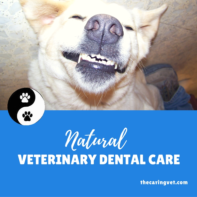 natural veterinary care