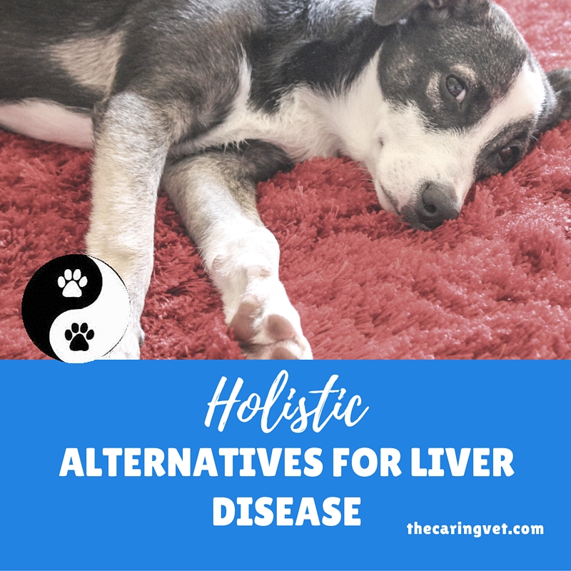 liver disease in pets