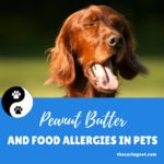 Peanut Butter and Food Allergies in Pets