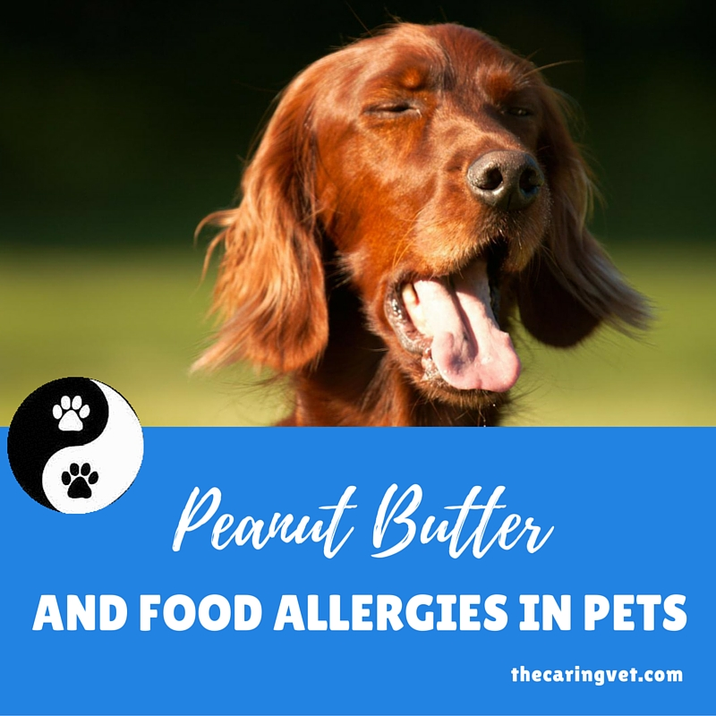 pets and peanut allergies