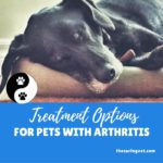 Treatment Options for Pets With Arthritis