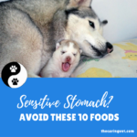 10 Foods Never to Feed Dog with Sensitive Stomach