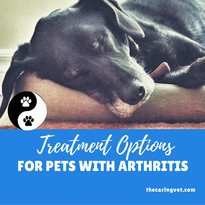 pets with arthritis holistic options