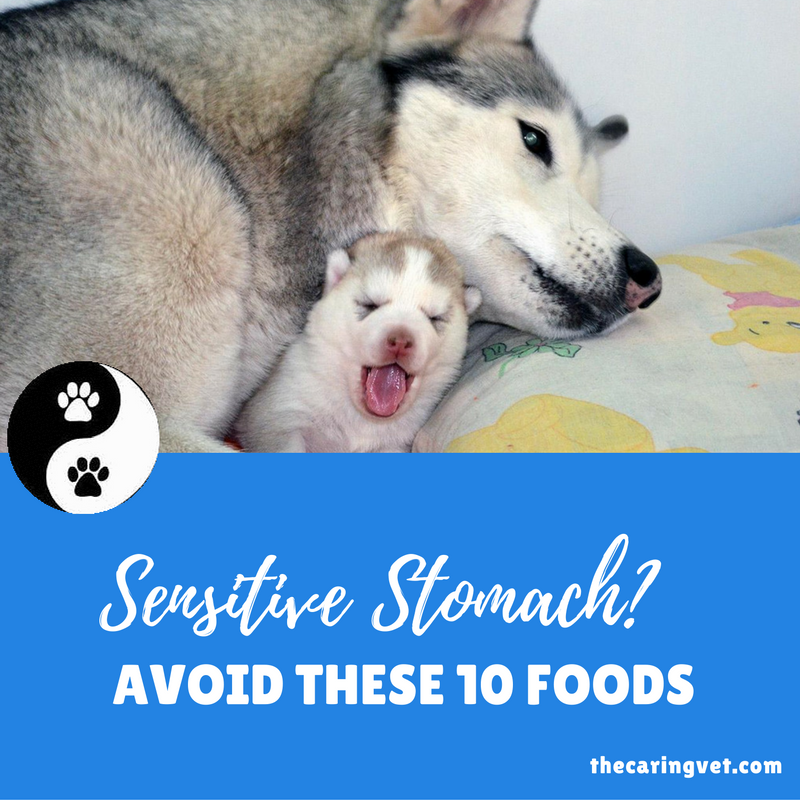 sensitive stomach foods to avoid