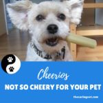 Cheerios—Not So Cheery For Your Pets!