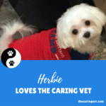 Herbie Loves the Caring Vet