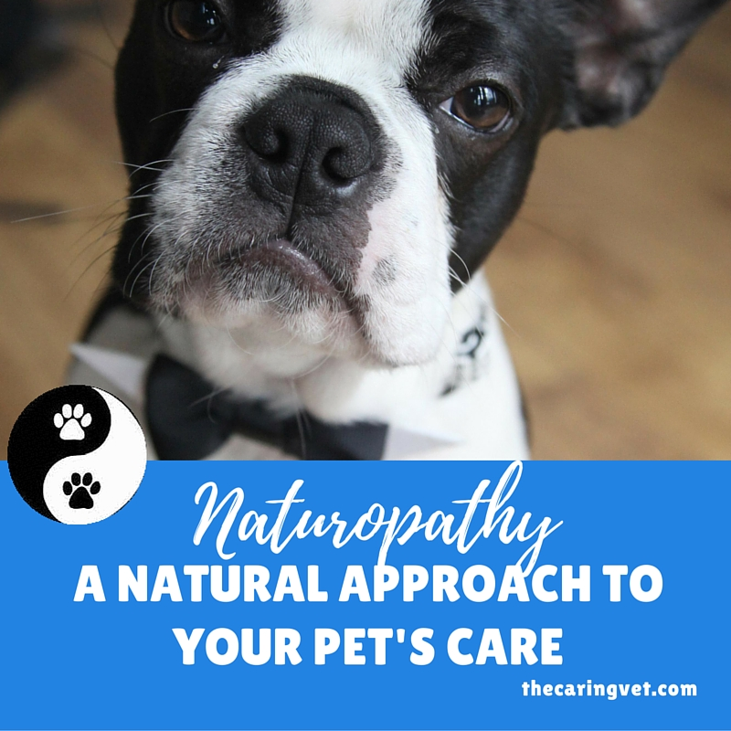 naturopathy for pets