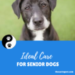Ideal Care for Senior Dogs