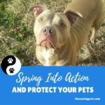 Spring Into Action & Protect your pets!