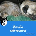 Giardia and It's Debilitating Effects on Your Pet's Immune System