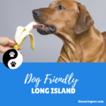 Dog Friendly Long Island