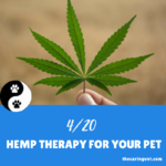 Hemp Therapy for Your Pet