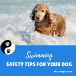 Taking Your Dog for a Summertime Swim?