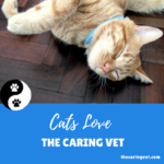 Cats Love The Caring Vet