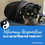 Veterinary Acupuncture… Is it an option for your pet?