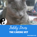 Teddy Loves The Caring Vet