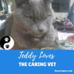 Teddy Loves The Caring Vet