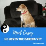 "The Caring Vet ""really cares"" About My Casey"