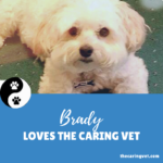Brady Loves The Caring Vet