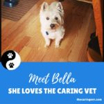 Bella Thinks The Caring Vet is By Far The Best On Long Island