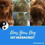 Does Your Dog Get Headaches?