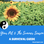 Your Pet & The Summer Season: A Survival Guide
