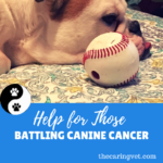 Help For Those Battling Canine Cancer