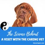 "The ""Science"" Behind A Visit With The Caring Vet"