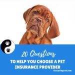 20 questions to help you choose a pet insurance provider