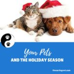 Thoughts about your Pet and the Holiday Season