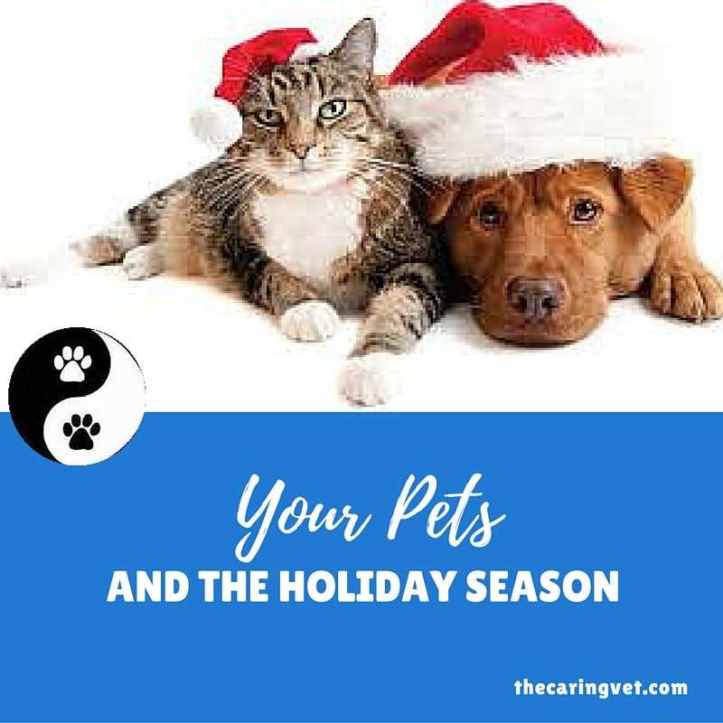 pets and the holiday season
