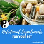 Nutritional Supplements for Your Pet