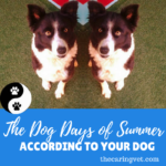 The Dog Days of Summer, According To Your Dog