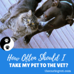 How often should I take my dog/cat to the Veterinarian?