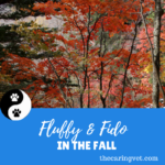 Fluffy & Fido in the Fall