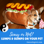 Scary Or Not: Lumps & Bumps On Your Pet
