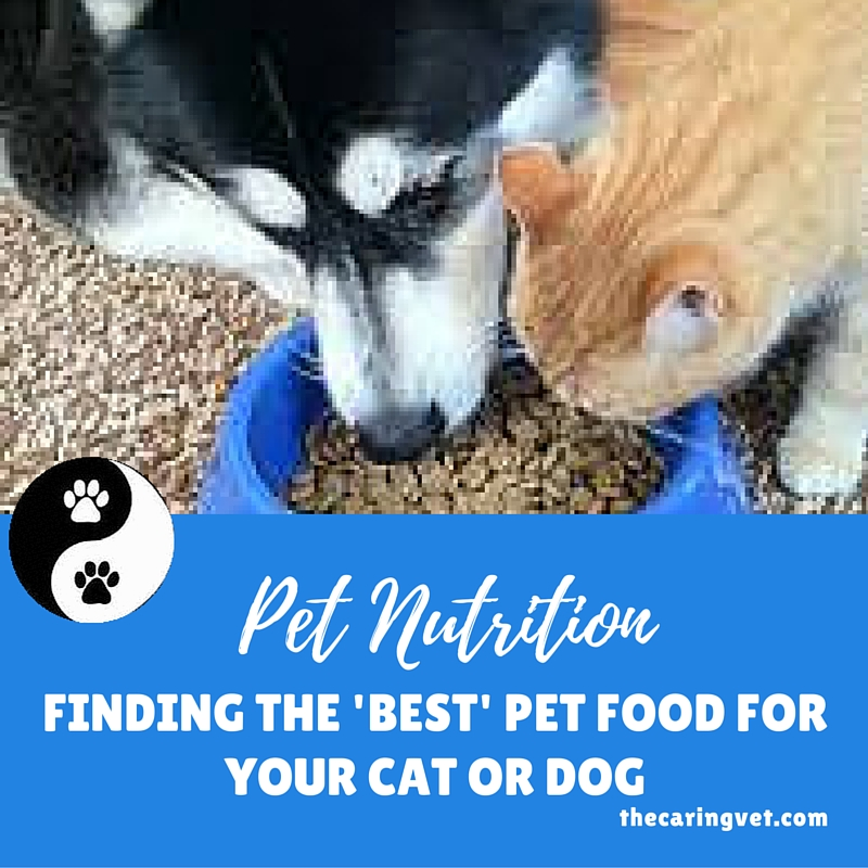 finding the right food for your pet