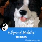 6 Signs of Diabetes in Dogs