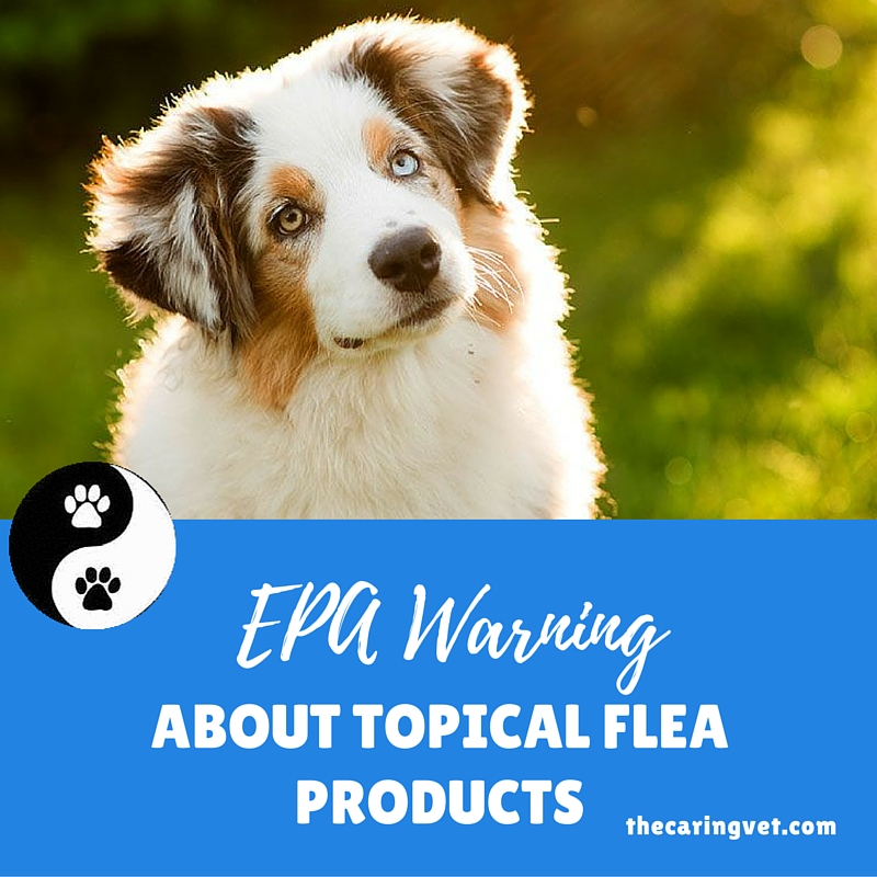 spa warning about topical flea products