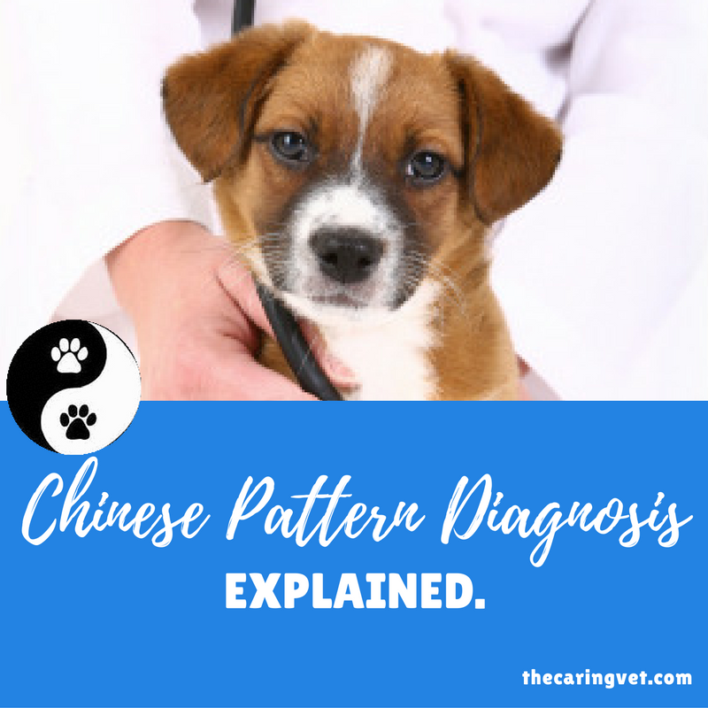 chinese pattern diagnosis for pets
