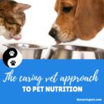 The Caring Vet Approach to Pet Nutrition