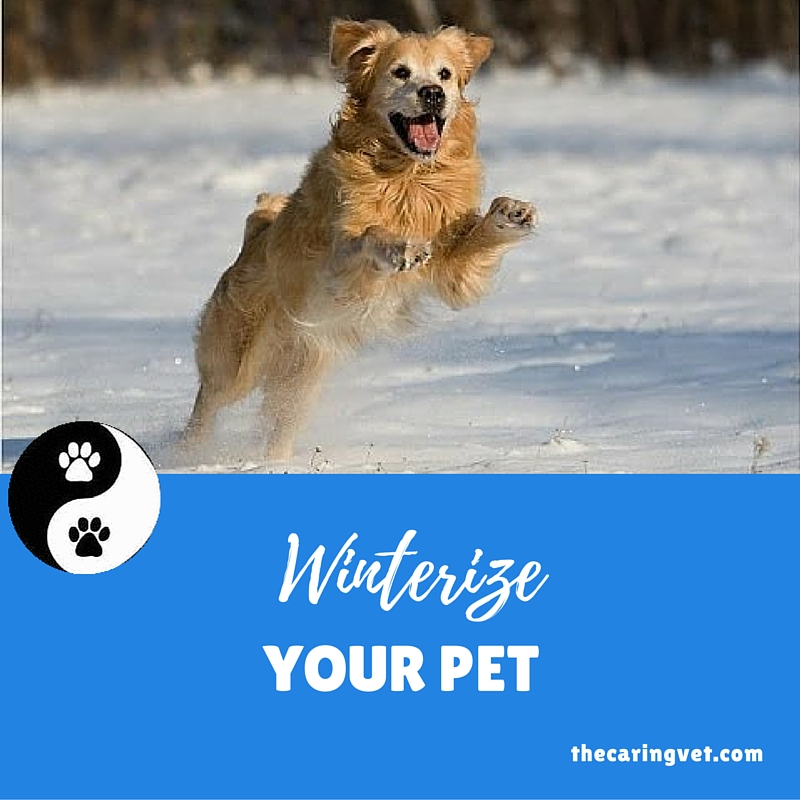 winterize your pet