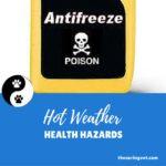 Hot Weather Health Hazards