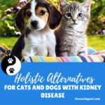 Holistic Alternatives for Cats and Dogs with Kidney Disease